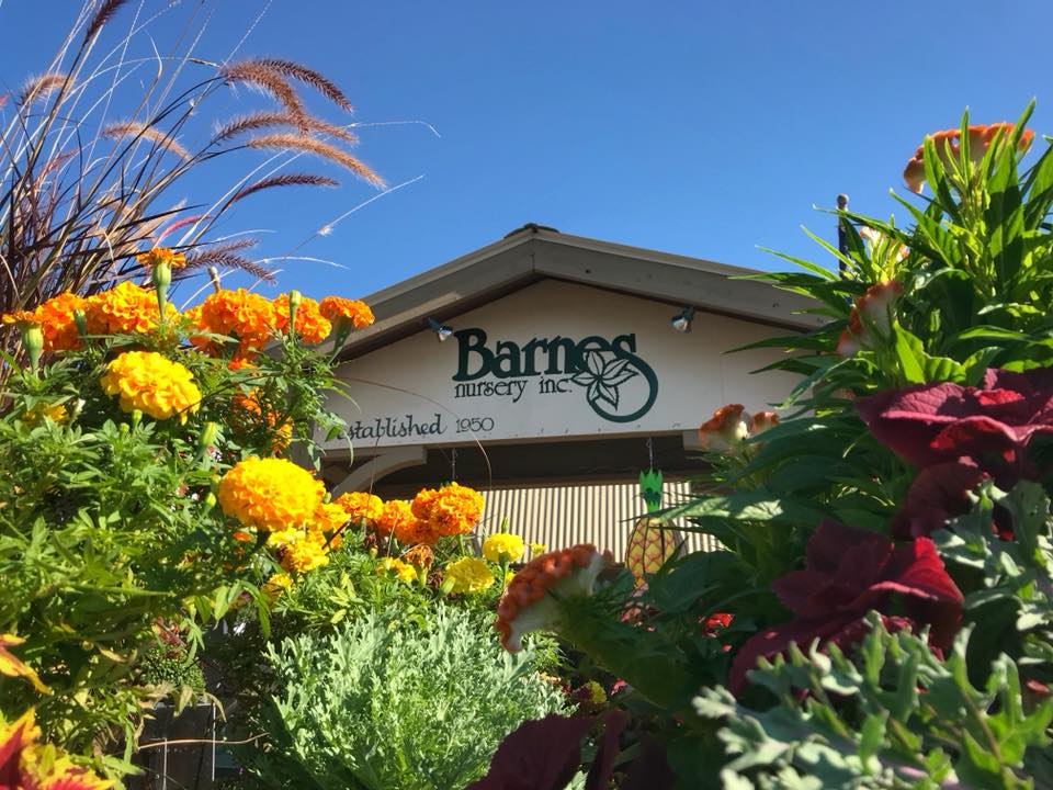Trade Plants, Meet Friends, Have Fun at the Barnes Nursery